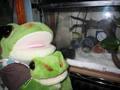 frog_akeome2010.jpg