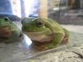 frog_nikoniko3.jpg