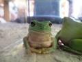 frog_nikoniko4.jpg