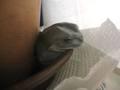 frog_nezou1.jpg