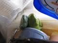 frog_nezou7.jpg