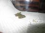 silkworm_fuka2.jpg
