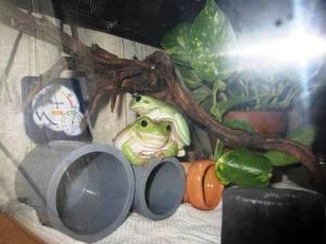 frog_dakituki1.jpg