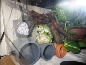 frog_dakituki2.jpg