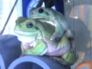 frog_dakituki4.jpg