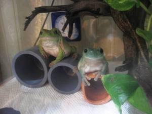 frog_dakituki5.jpg