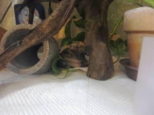 frog-roku1.jpg