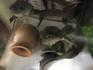 frog-roku2.jpg