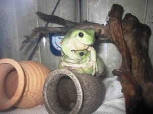 frog_jiken1.jpg