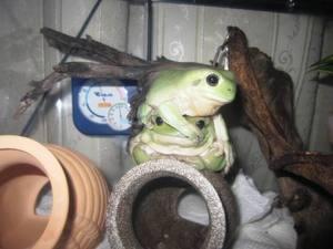 frog_jiken2.jpg