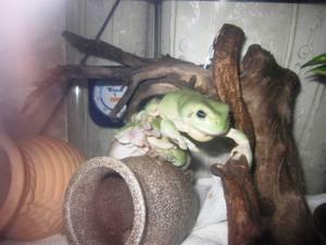 frog_jiken3.jpg