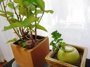nisi_foods10.jpg