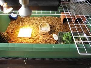cage11.jpg