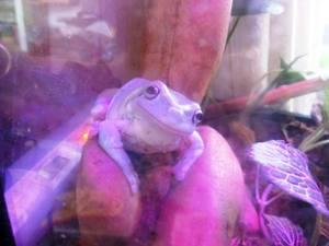 frog_baby25.jpg