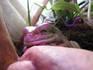 frog_pose23.jpg