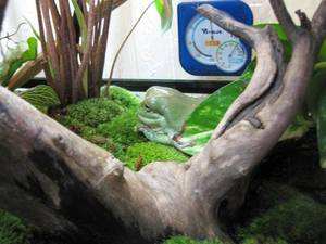 frog_terrarium2.jpg