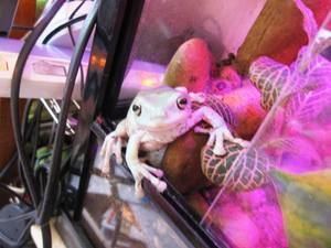frog_baby27.jpg