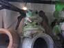 frog_pose10.jpg