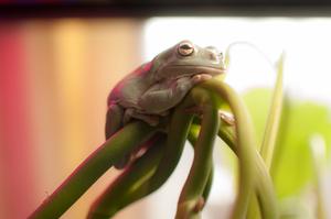 frog_pose27.jpg