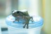 frog_pose28.jpg