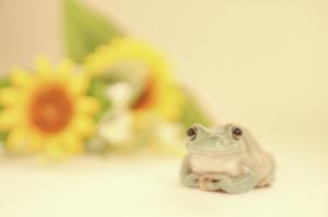 frog_pose29.jpg