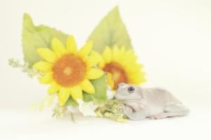 frog_pose30.jpg